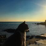 cat contemplating life